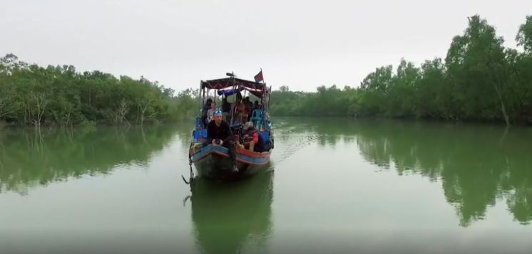 waes-mangrove