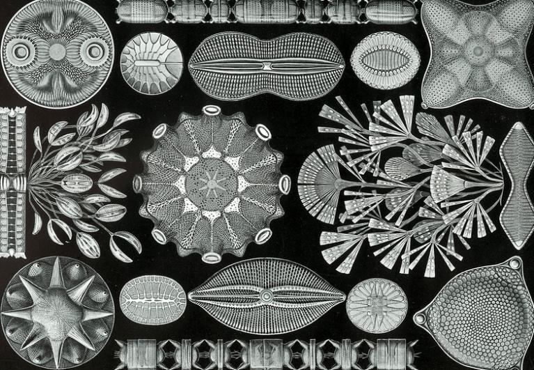 diatomeec3abn.png
